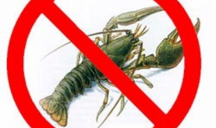 З 15 серпня на Чернігівщині заборонений вилов раків