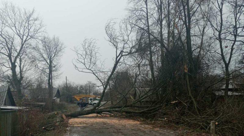 У Конотопі працюють над видаленням аварійних дерев