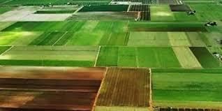 Порядок  виділення  власникам  земельних  часток  (паїв) земельних  ділянок  у  натурі  (на місцевості)