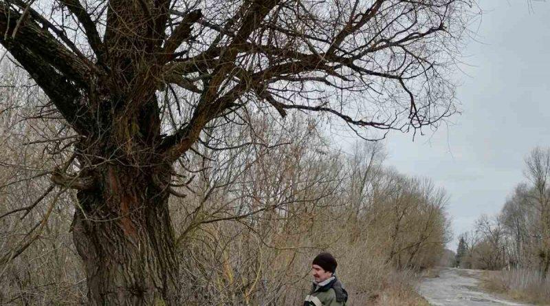 У новостворених старостатах провели обстеження аварійних дерев