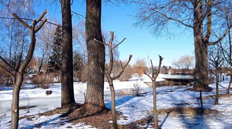 Розпочалося весняне кронування дерев